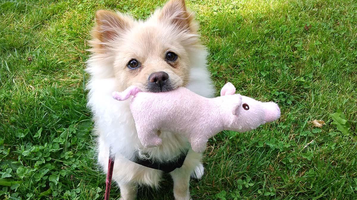Luka with Piggy