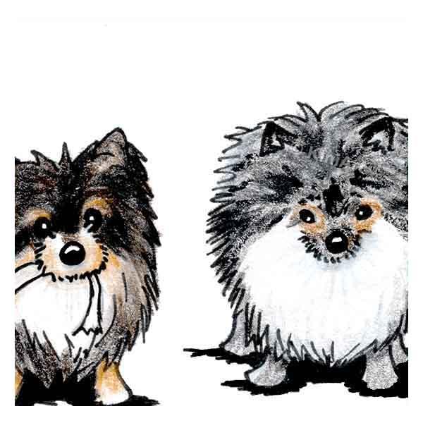 KiniArt Pomeranian art